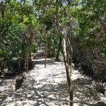 Ancient Tulum was a walled city. When you approach, you walk around the wall.