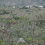 View from the top, Coba.