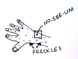 Drawing of no see ums (biting midges), expanded view