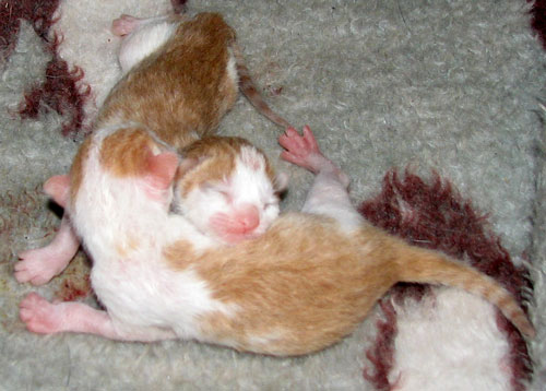 The kittens that were born on Charlie's bed
