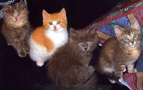Four boatyard kittens