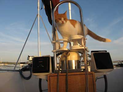 Photo of Ernie the Cat at the helm of Shirley Jeanne