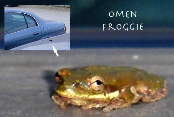 Omen Froggie sitting on Stevie's car with an inset showing his size