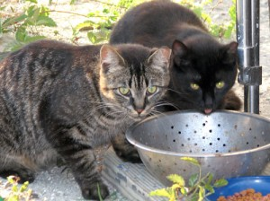 Flutterby's feral cats